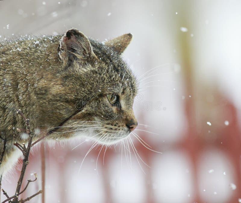 Retrato interessante o gato listrado textured da rua senta-se no estreptococo foto de stock royalty free