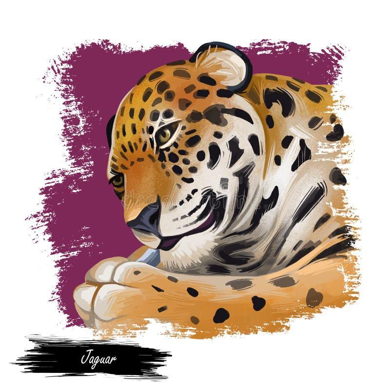 Retrato Jaguar fechado Panthera uma vez tipo fauna carnívora Vida selvagem da América do Sul, desenhada como mamífero com casaco  ilustração stock