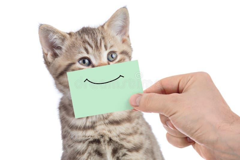 Retrato joven feliz divertido del gato con sonrisa en la cartulina verde aislada en blanco foto de archivo libre de regalías
