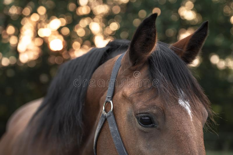 Retrato lateral de un caballo apacible foto de archivo libre de regalías