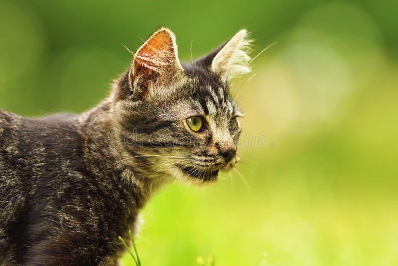 Retrato lindo del gatito en el jardín fotografía de archivo libre de regalías