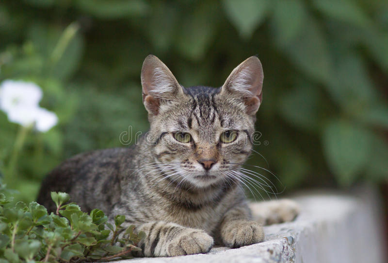 Retrato lindo del gato nacional al aire libre fotografía de archivo libre de regalías