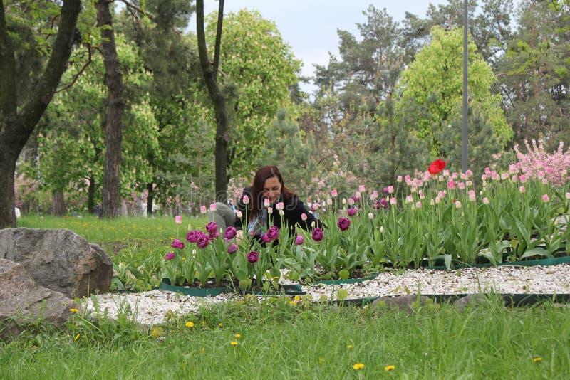 Retrato moreno bonito da menina com o close up vermelho das tulipas no fundo branco dentro, espa?o para o texto Cheiro ? moda da  fotografia de stock