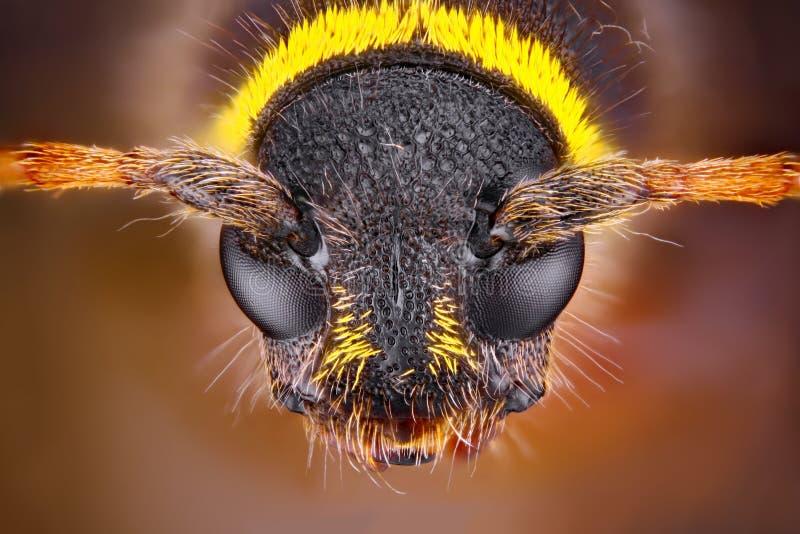 Retrato muy agudo y detallado de un insecto El objetivo del microscopio fue utilizado fotografía de archivo
