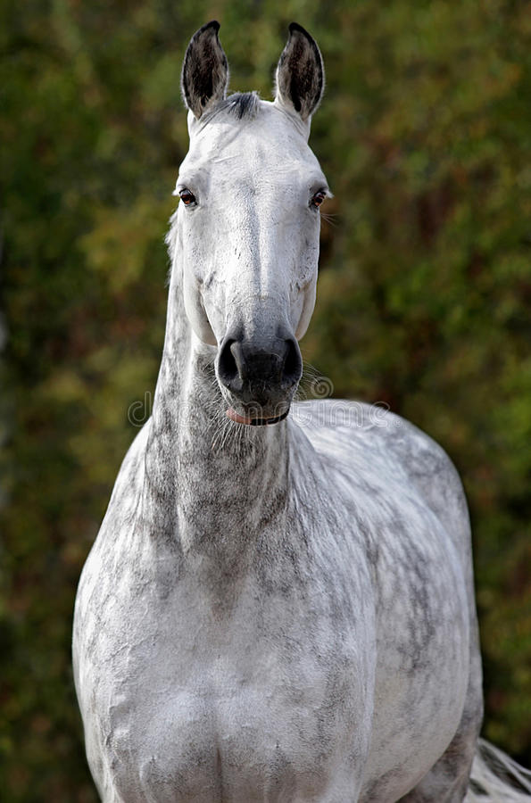 Retrato oh un caballo imagen de archivo libre de regalías