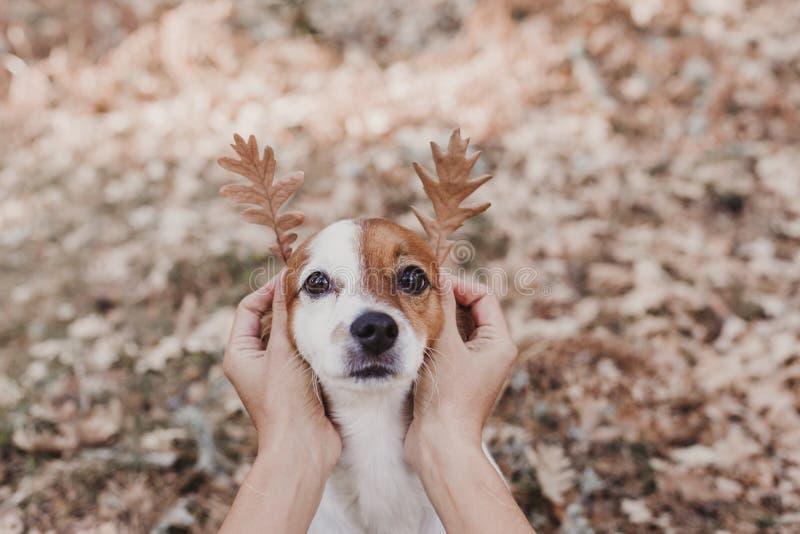 retrato pequeno bonito do cão com as folhas engraçadas para as orelhas Assento no fundo marrom das folhas Conceito do outono Anim imagens de stock royalty free