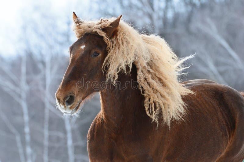 Retrato pesado do cavalo de Brown no movimento imagem de stock