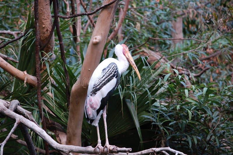 Retrato pintado de la cigüeña en parque zoológico imagen de archivo