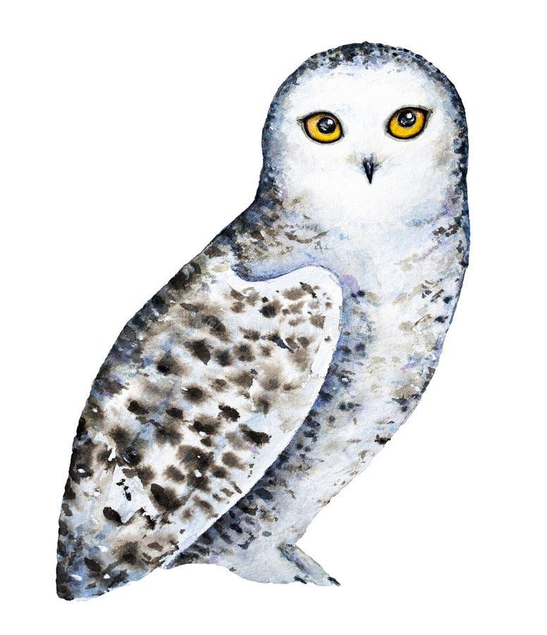 Retrato polar del búho Nevado ilustración del vector
