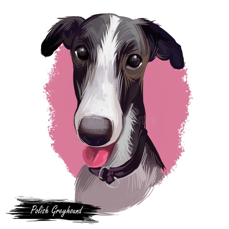 Retrato polonês do cão do galgo isolado no branco Cão tirado mão da ilustração da arte de Digitas para a Web, a cópia do t-shirt  ilustração do vetor