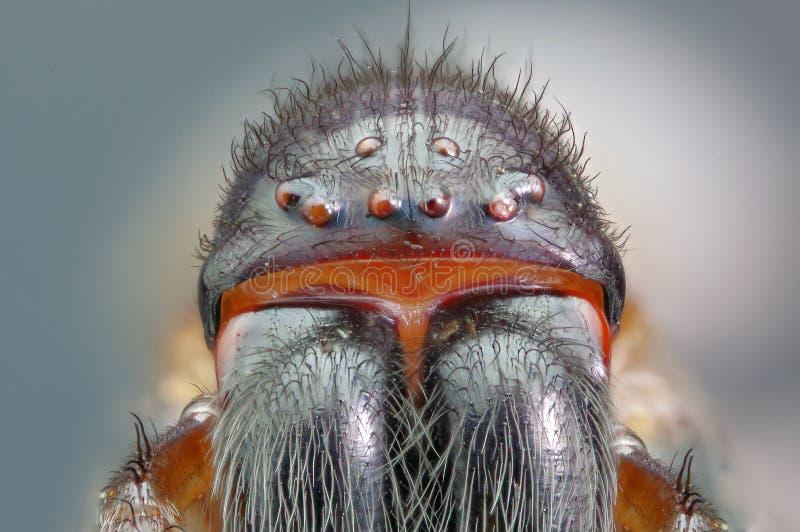 Retrato principal de la araña fotos de archivo libres de regalías