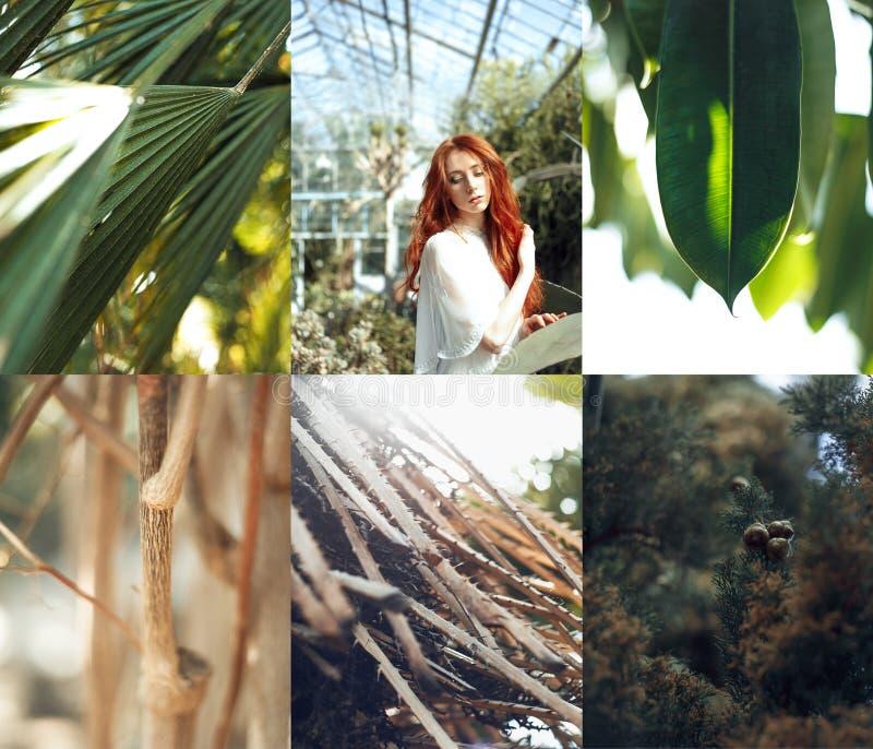 Retrato rojo de la muchacha del pelo con collage tropical de las plantas fotografía de archivo libre de regalías