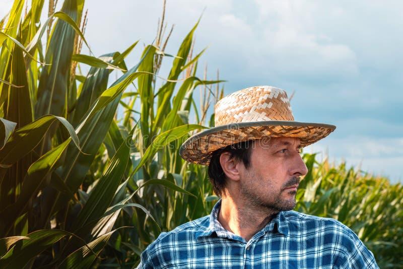 Retrato sério do fazendeiro do milho no campo cultivado fotografia de stock