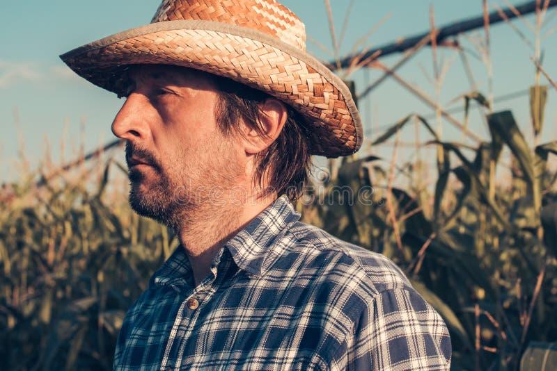 Retrato serio confiado del granjero en campo de maíz fotografía de archivo