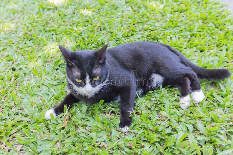 Retrato siniestro espeluznante de la cara del gato negro imagen de archivo