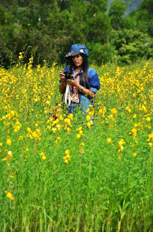 Retrato tailandés de las mujeres en campo del juncea del Crotalaria en el campo Nakornratchasrima fotografía de archivo