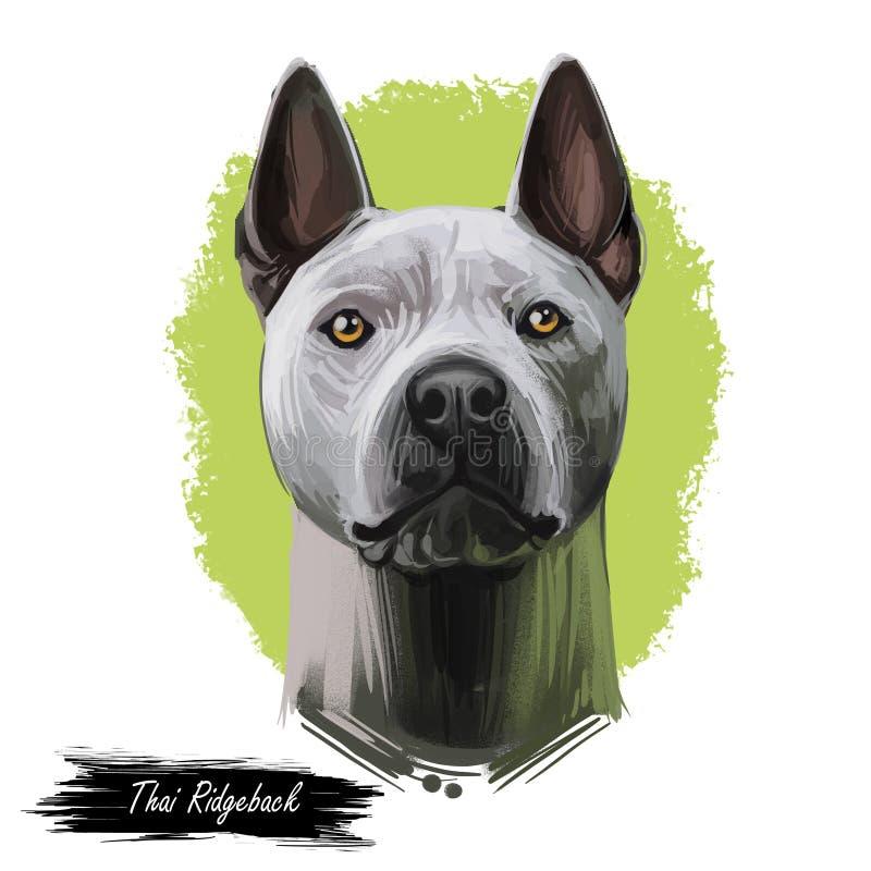 Retrato tailandês azul do cão de Ridgeback isolado no branco Ilustração da arte de Digitas, desenho animal da aquarela de canino  ilustração stock