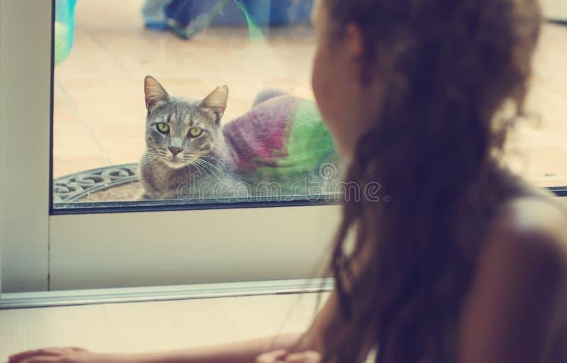Retrato tonificado da menina que olha para fora a janela no gato fotos de stock