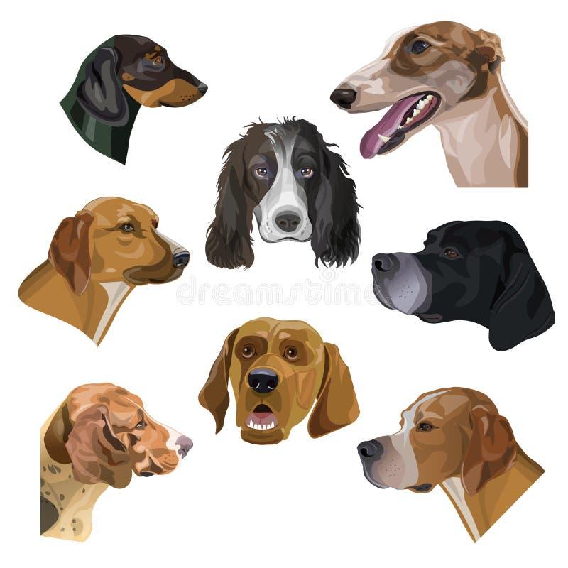Retratos com cabeças de cães da caça ilustração do vetor