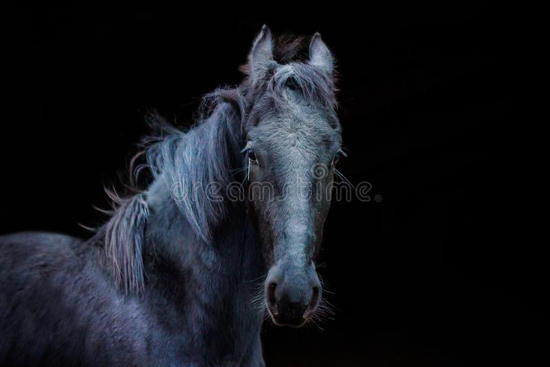 Retratos de caballos imagen de archivo libre de regalías