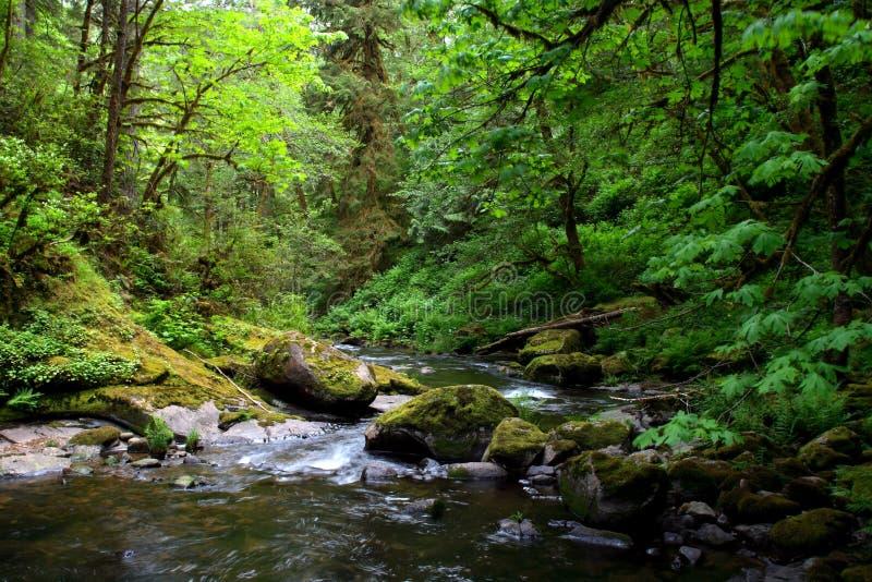 Retratos de Oregon fotos de archivo libres de regalías