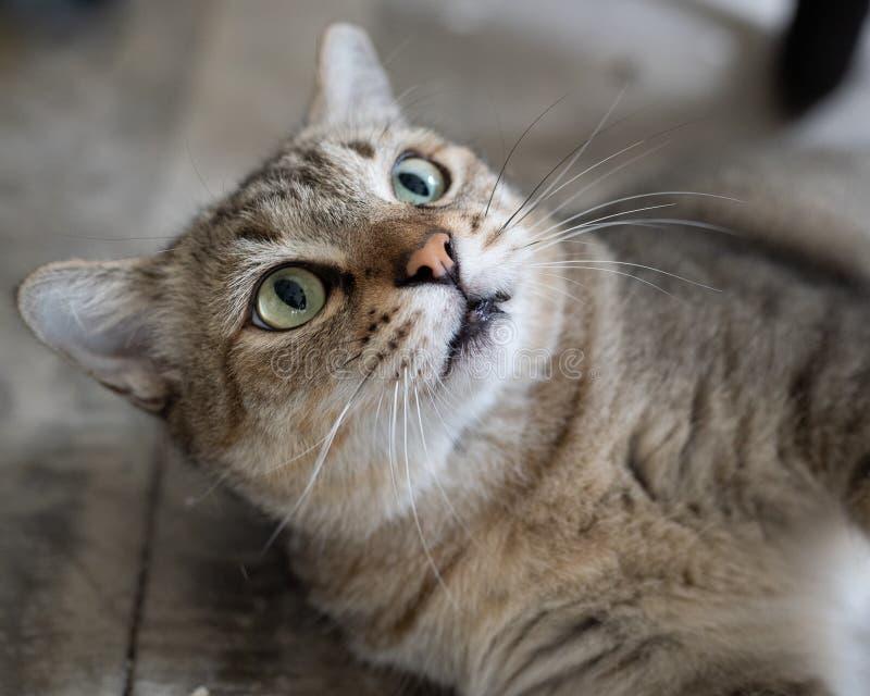 Retratos para gatos imagem de stock royalty free