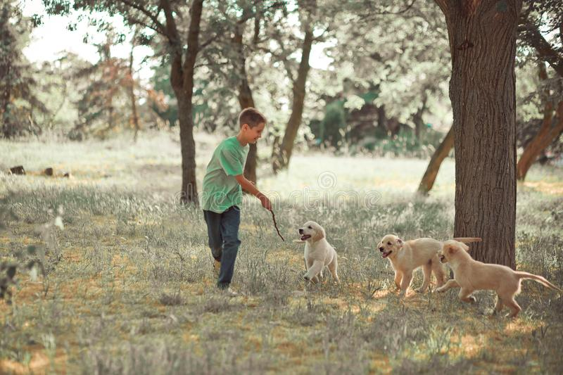 Retriever pup Lovely scene handsom teen boy enjoying summer time vacation with best friend dog ivory white labrador puppy.Happy ai. Rily careless childhood life stock images