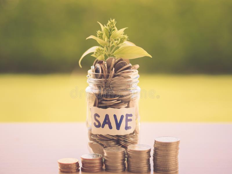 Retro abstract money saving small baby tree with glass jar Coins. With stack coins on table with green tree background royalty free stock image