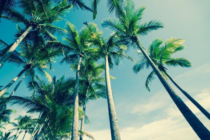 Retro- Bild Palmen stockbild