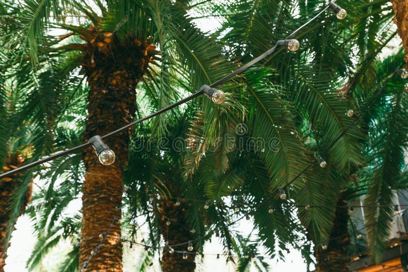 Retro- Birnengirlande auf einer Palme, einer tropischen Hochzeit oder Sommerfestdekorationen lizenzfreie stockfotos