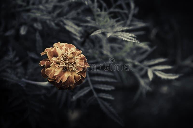Retro bloemen, Uitstekende Bloemenachtergrond stock afbeeldingen