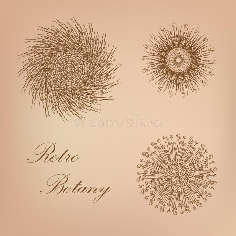 Retro Botany stock illustration