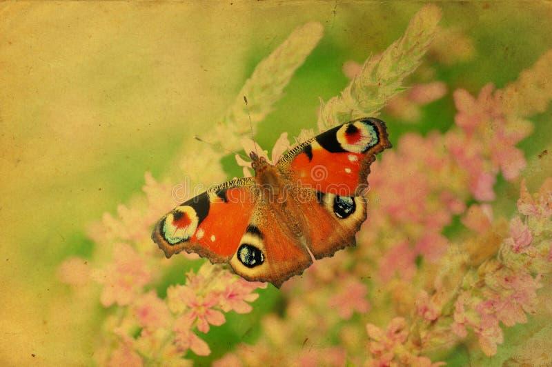 Retro cartolina d'auguri della farfalla di Grunge fotografia stock