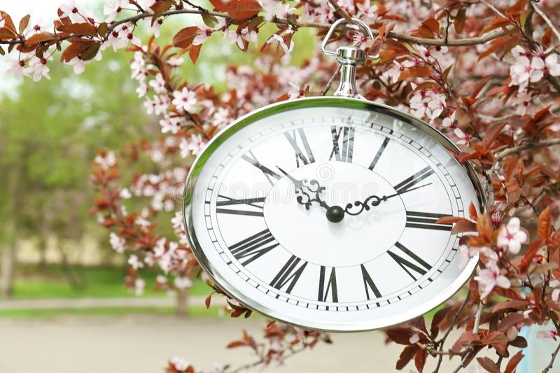 Retro clock hanging on blossoming tree branch stock image
