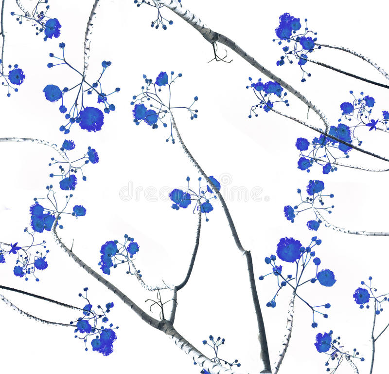 Retro color tone of flower branch with white background. Retro color tone of the flower branch with white background stock photo