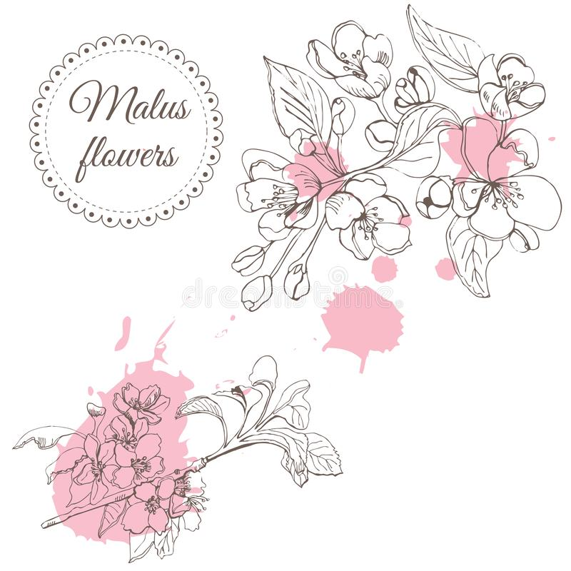 Retro composition of blossoming branch of apple tree and abstract pink spots. Hand drawn sketch of malus flowers on white backgro vector illustration