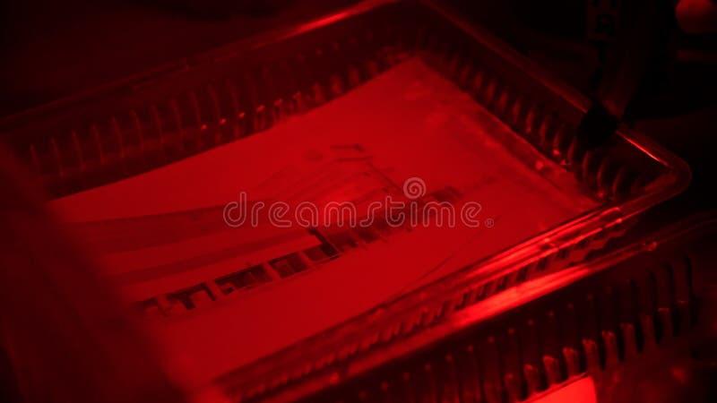 Retro druk fotografie w darkroom Darkroom rozwijać film i tworzyć fotografie używać różne substancje chemiczne Suszarnicze fotogr zdjęcia stock
