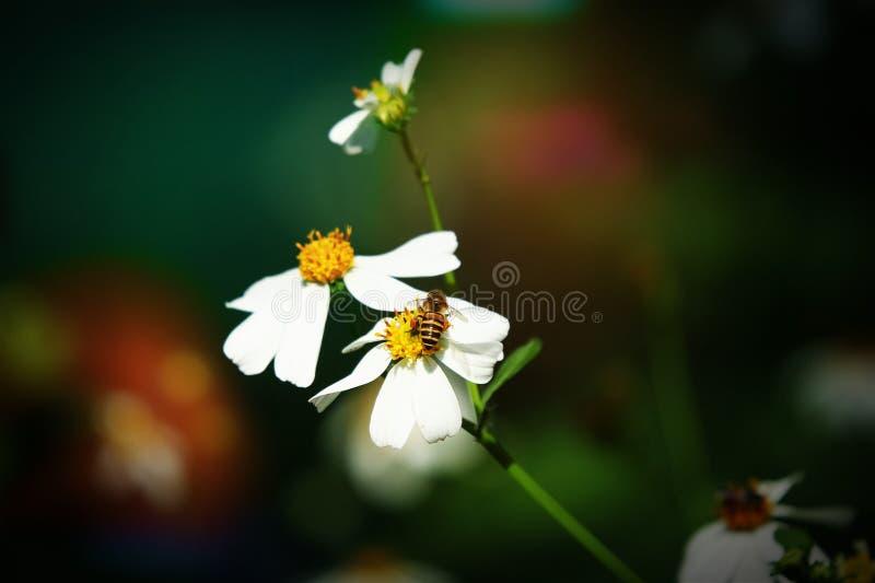 Retro style on small white flower stock photos