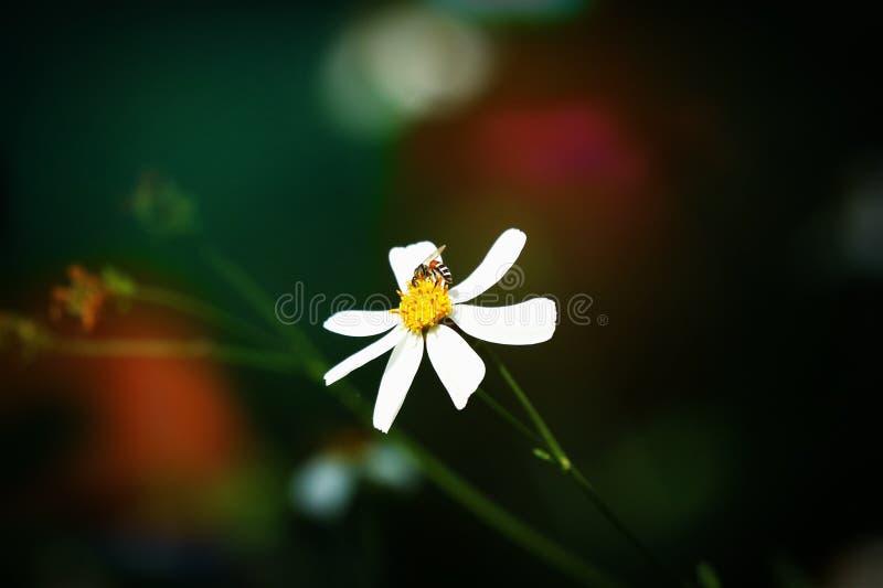 Retro style on small white flower stock photo