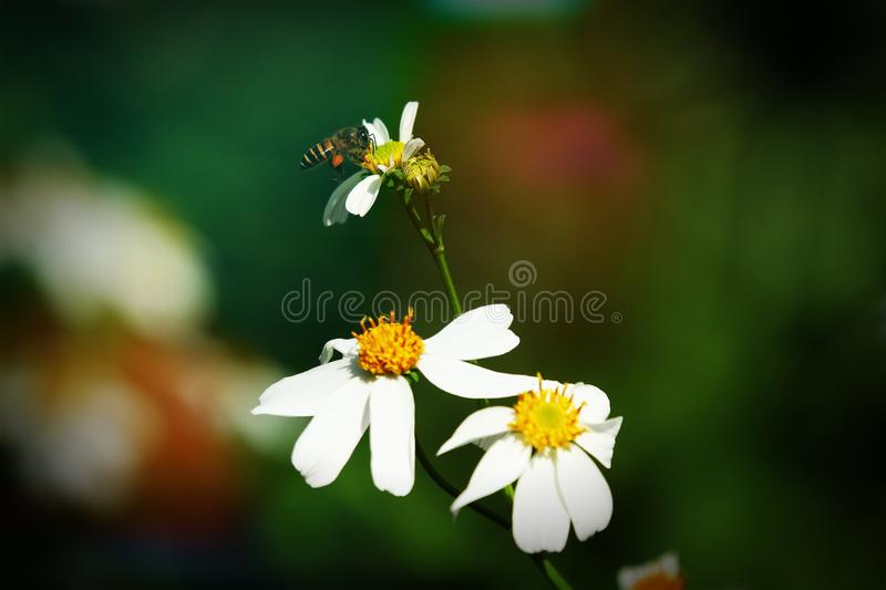 Retro style on small white flower royalty free stock image