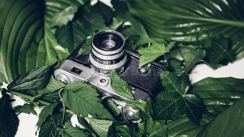 Retro film camera in green leaves, top view. Vintage technology stock photo
