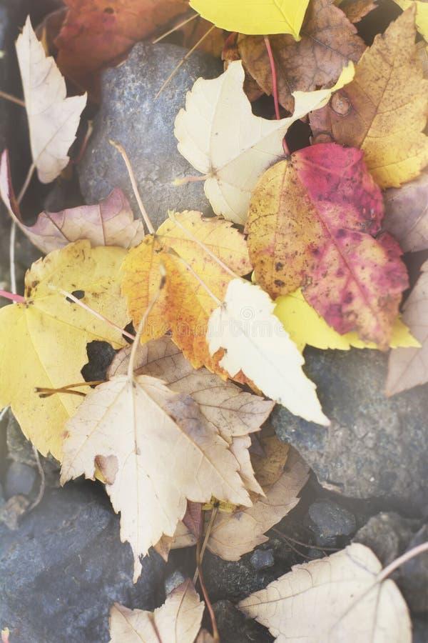Retro filmu stylu fotografia jesień, spadek, ciepły, Nowa Anglia liście spadać na skalistej ziemi jezioro obraz royalty free