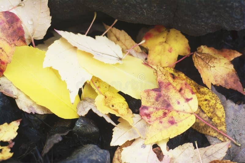 Retro filmu stylu fotografia jesień, spadek, ciepły, Nowa Anglia liście spadać na skalistej ziemi jezioro obrazy royalty free