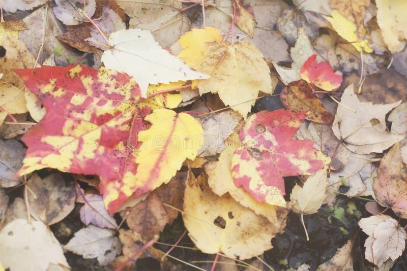 Retro filmu stylu fotografia jesień, spadek, ciepły, Nowa Anglia liście spadać na skalistej ziemi jezioro zdjęcia stock