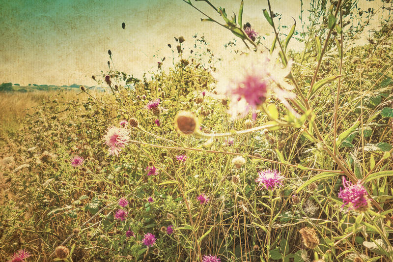 Retro fiori di estate fotografia stock