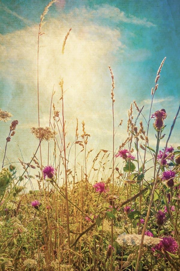 Retro fiori di estate immagine stock libera da diritti