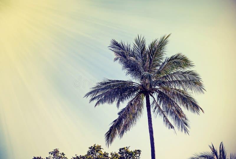 Retro fondo filtrato d'annata sbiadito della palma fotografie stock