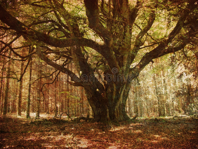 Download Retro forest stock photo. Image of landscape, atmosphere - 8784354