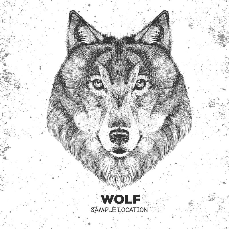 Retro Hipster animal wolf. Hand drawing Muzzle of wolf. Retro Hipster wolf. Hand drawing Muzzle of wolf stock illustration