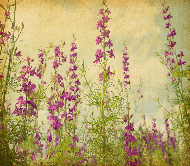 Download Violet delphiniums. stock image. Image of colored, flower - 29892361